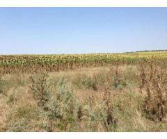 Vand terenuri extravilane la Nuntasi si Corbu- ieftine!