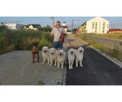 Dresaj canin la domiciliul clientului Timisoara - anunturi gratuite