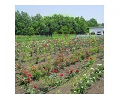 Pepiniera Pomicola - Comercializam pomi fructiferi altoiti certificati